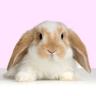 bunnybunnies
