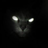 basementcat